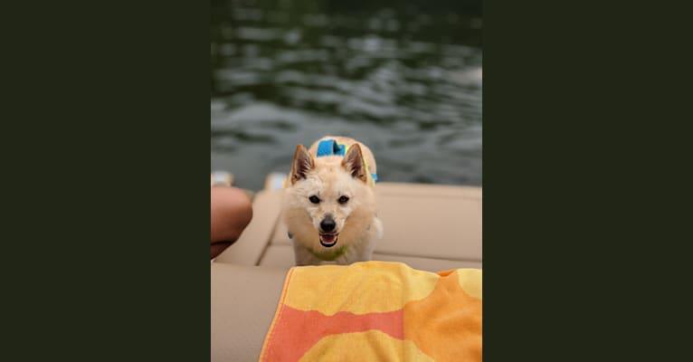 Photo of Loki, a Schipperke