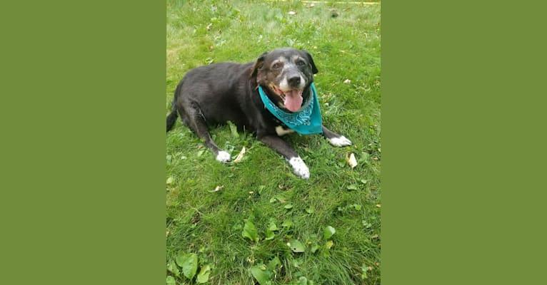 Photo of Tasha, a Beagle, Akita, Labrador Retriever, and Chow Chow mix in Louisiana, USA