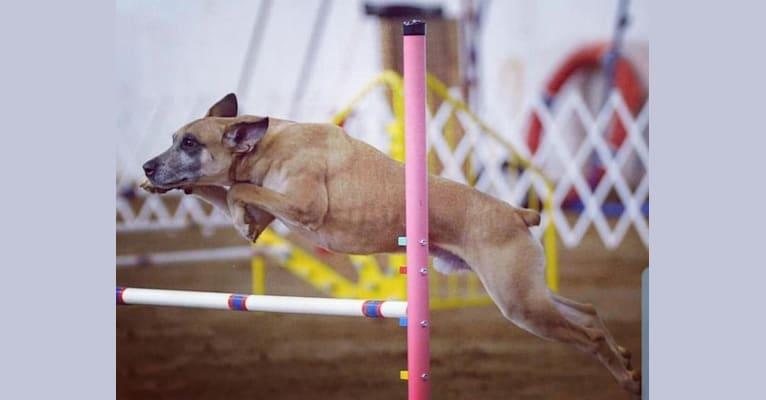 Photo of Ender, an American Village Dog  in Hampton, Virginia, USA