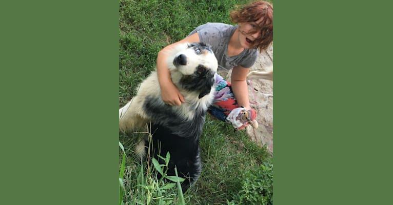 Photo of Salazar, an Australian Shepherd Group  in Mullins, SC, USA