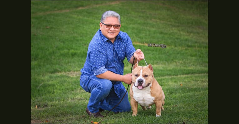 Photo of 👌🏼MAKOY, an American Bully  in Issaquah, WA, USA