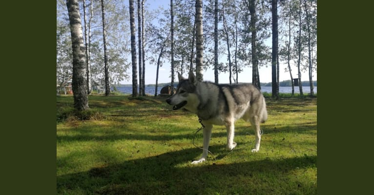 Photo of Ragnar, a   in Suomi