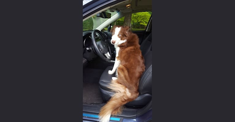 Photo of Rebel, a Border Collie  in Kentucky, USA