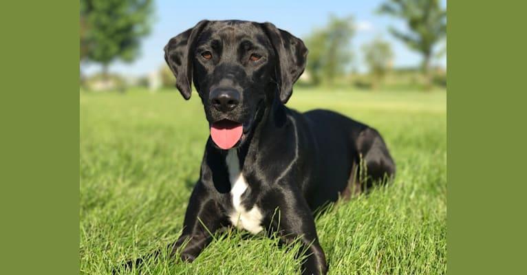 Photo of Kobi, a Labrador Retriever and Beagle mix in Alabama, USA