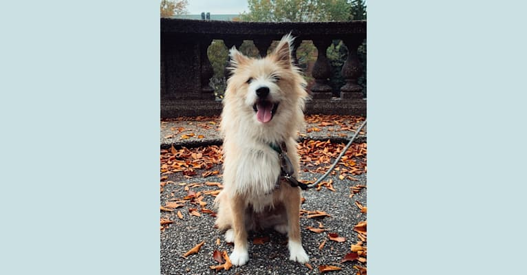 Photo of Quincy, a Japanese and Korean Village Dog and Jindo mix in South Korea