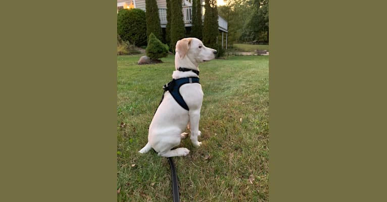 Photo of Tucker Abe, an American Pit Bull Terrier, Beagle, Boxer, and Mixed mix in Kentucky, USA