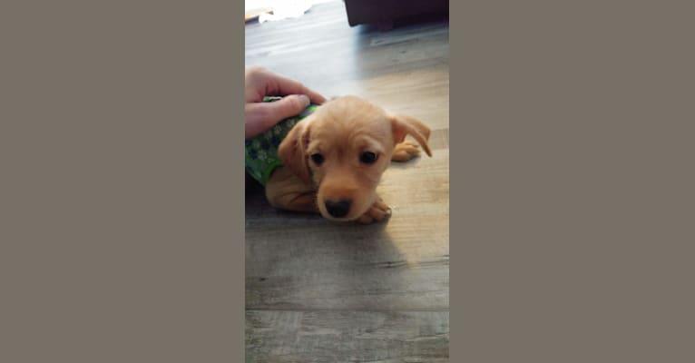 Photo of Zuma, a Chihuahua, Pomeranian, Miniature Pinscher, Pug, Bichon Frise, and Dachshund mix in Duluth, Minnesota, USA