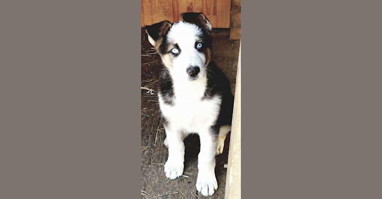 Photo of Sadie Rae, a German Shepherd Dog