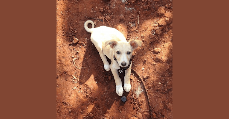 Photo of Chance, a Central and East African Village Dog  in Bududa, Eastern Region, Uganda