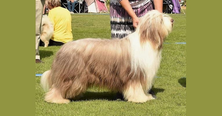Photo of Silas, a Bearded Collie  in Tystberga, Sverige