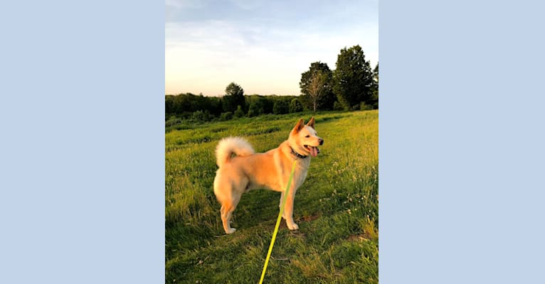 Photo of Zeus, a Chow Chow, Australian Cattle Dog, German Shepherd Dog, and Mixed mix in Alabama, USA