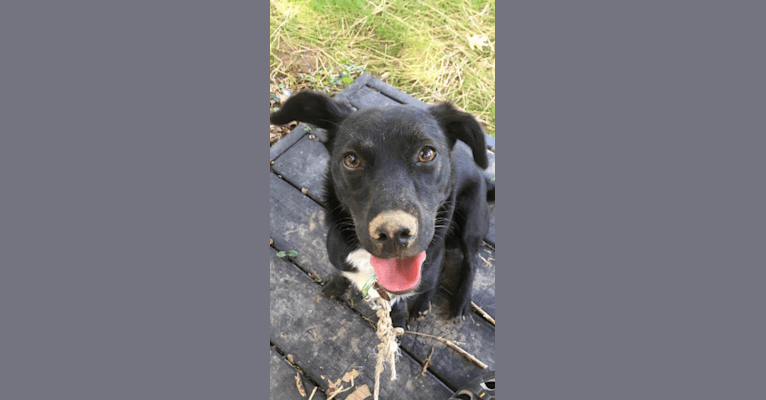 Photo of Ruby, a Treeing Walker Coonhound, Dachshund, Australian Cattle Dog, and Mixed mix