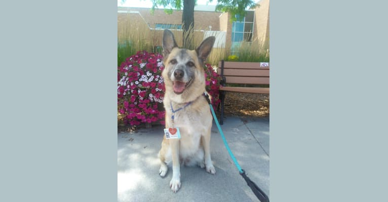 Photo of Libby, a German Shepherd Dog, Saint Bernard, and Great Pyrenees mix in Ravenna, Nebraska, USA