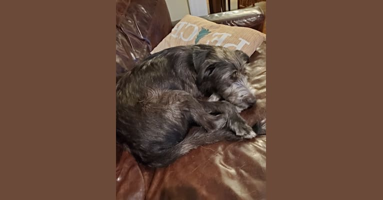 Photo of Baxter, an American Pit Bull Terrier, Labrador Retriever, Australian Cattle Dog, and Mixed mix in Beaumont, TX, USA