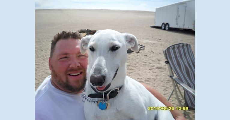 Photo of Roxy, a Carolina Dog  in South Carolina, USA