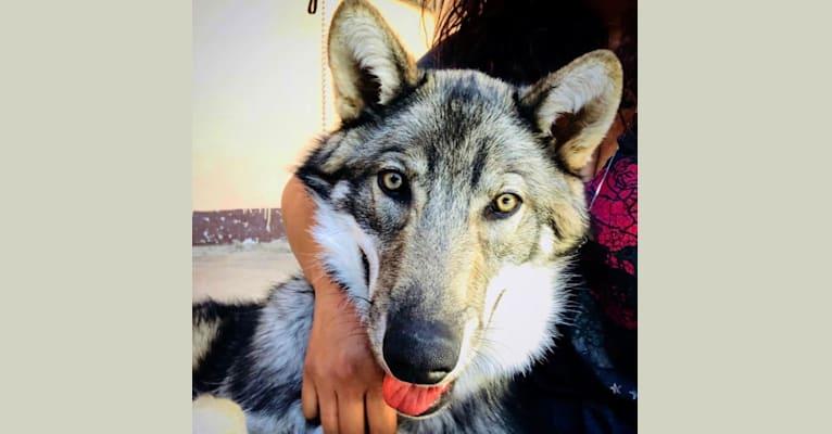 Photo of Mufasa, a   in CDMX, México
