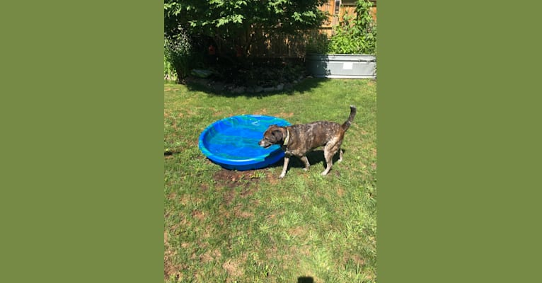 Photo of Charlie, an Australian Cattle Dog, Pug, and Beagle mix in Ontario, Canada