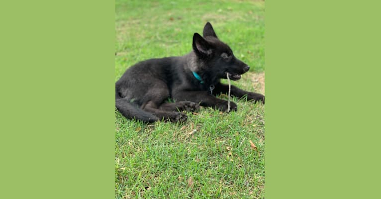 Photo of Nox, a   in Midway, Arkansas, USA