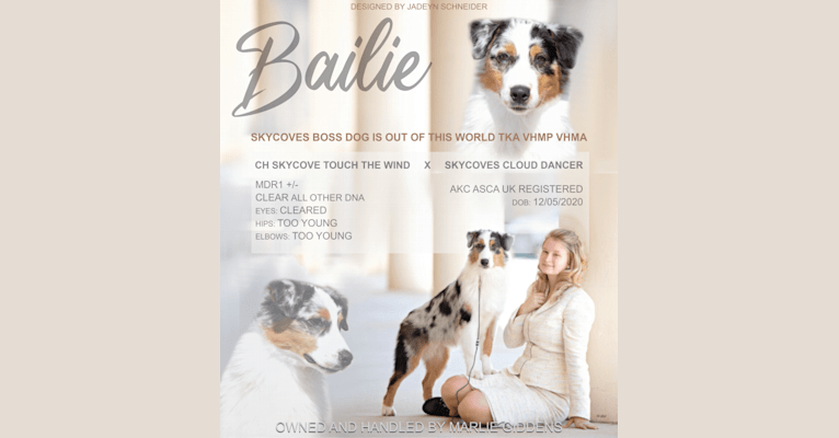 Photo of Bailie (Skyecoves Boss Dog is Out Of This World), an Australian Shepherd Group  in Alma, Georgia, USA