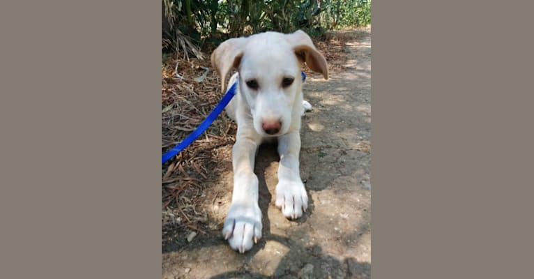 Photo of Milo, a Northern East African Village Dog mix in Tunis, Tunis, Tunisia