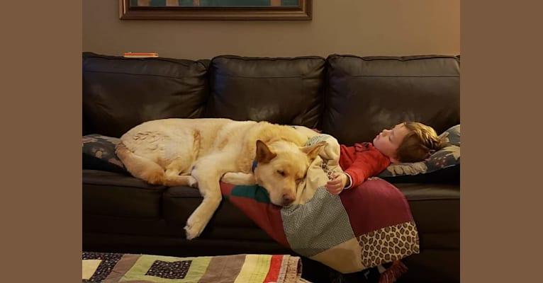 Photo of Ben, a German Shepherd Dog, Samoyed, Labrador Retriever, Poodle (Small), and Golden Retriever mix in Flat Bay, Newfoundland and Labrador, Canada