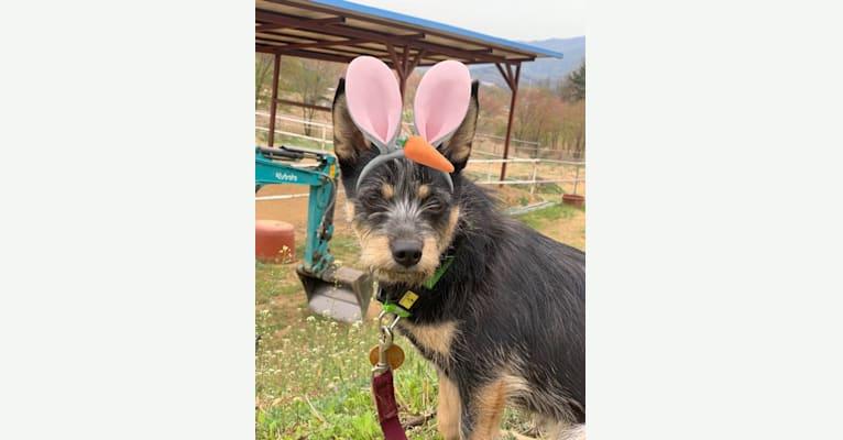 Photo of Juniper Bean Tate Kim, a Japanese and Korean Village Dog  in Wonju-si, Gangwon-do, South Korea