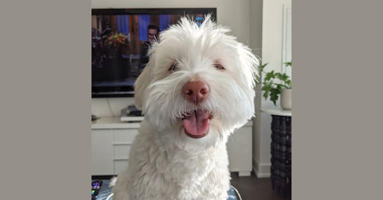 Photo of Bernie, an Arabian Village Dog  in Toronto, Ontario, Canada