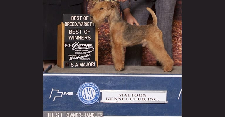 Photo of Max, a Lakeland Terrier  in Grove City, MN, USA