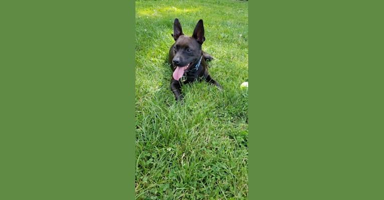 Photo of Lucas, a Russell-type Terrier, Labrador Retriever, Chow Chow, German Shepherd Dog, Shih Tzu, Beagle, and Mixed mix
