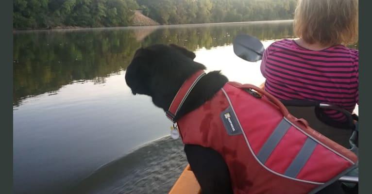 Photo of Victor, a Labrador Retriever, German Shepherd Dog, Border Collie, and Golden Retriever mix in Kentucky, USA