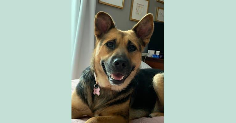 Photo of Rosie Jane, a German Shepherd Dog, Chow Chow, Labrador Retriever, and Mixed mix in Georgia, USA