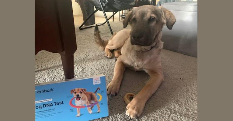 Photo of Valerie, an American Bulldog, Chinese Shar-Pei, Golden Retriever, Labrador Retriever, and German Shepherd Dog mix in Mississippi, USA