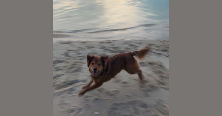 Photo of Cooper, a German Shepherd Dog, Rottweiler, Labrador Retriever, Doberman Pinscher, Chow Chow, and Mixed mix in Tall Timbers, Maryland, USA