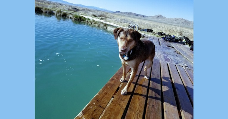 Photo of Jericho Dunes, a Labrador Retriever, Border Collie, American Pit Bull Terrier, Australian Cattle Dog, and Mixed mix in California, USA
