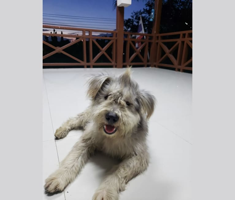 Photo of Shaggy, a Southeast Asian Village Dog  in Pass Christian, Mississippi, USA