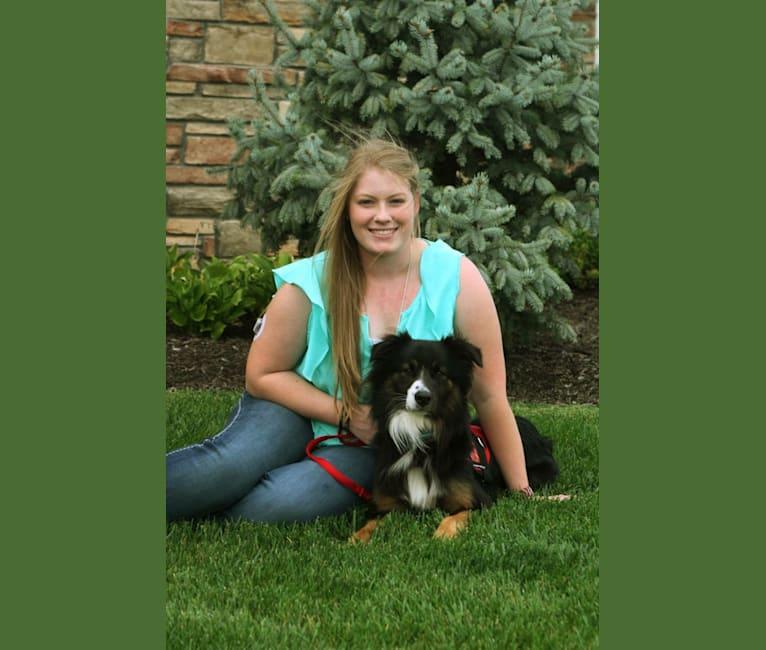 Photo of Jeter Brolinn, an Australian Shepherd Group  in Lincoln, Nebraska, USA