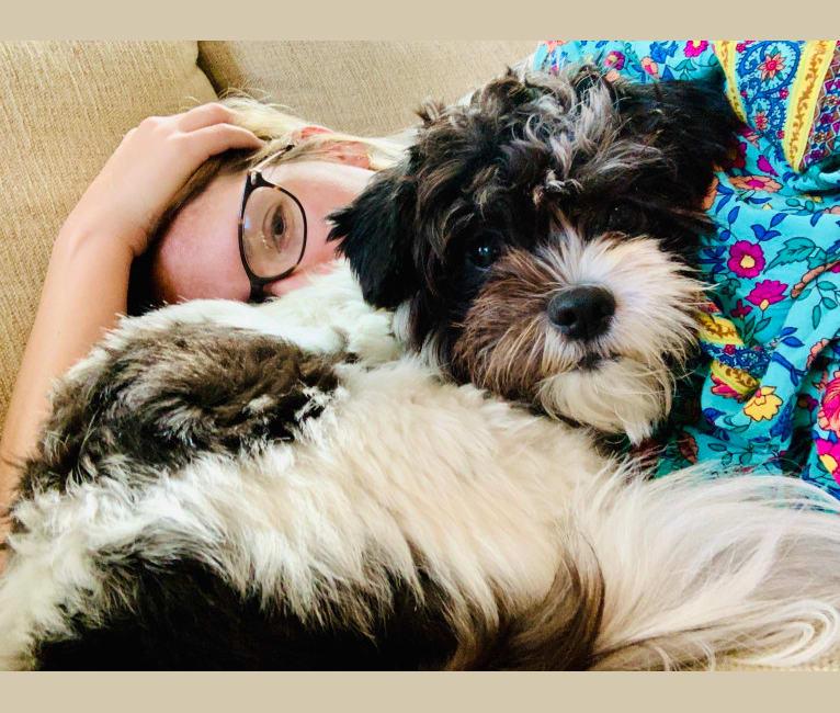 Photo of Stella, a Shih Tzu, Pomeranian, and Chihuahua mix in Key Largo, Florida, USA