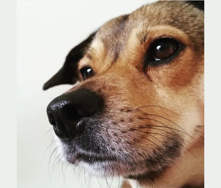 Photo of Maya, a Cocker Spaniel, American Pit Bull Terrier, Lhasa Apso, Dachshund, Akita, and Mixed mix in Coatesville, Pennsylvania, USA