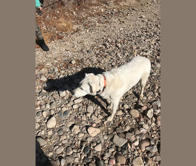 Photo of Casper, an Australian Cattle Dog, German Shorthaired Pointer, Cocker Spaniel, Australian Shepherd, Border Collie, and Mixed mix in Colorado Springs, Colorado, USA