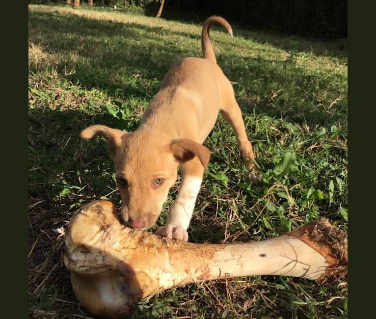 Photo of Hope, an African Village Dog  in Kiserian, Kajiado County, Kenya