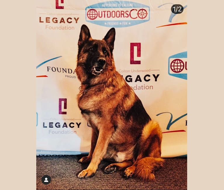 Photo of Thor, a German Shepherd Dog  in South Korea
