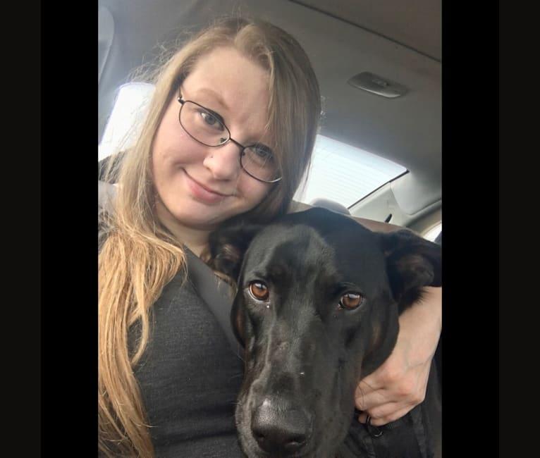Photo of Dewey, a Bloodhound, German Shepherd Dog, Labrador Retriever, and American Bully mix in Kentucky, USA