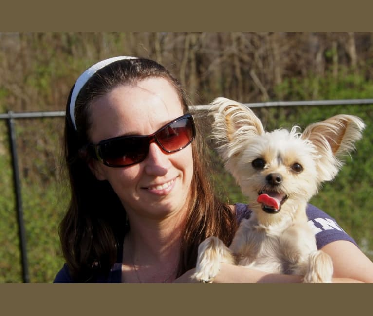 Photo of River, a Chorkie  in Missouri, USA