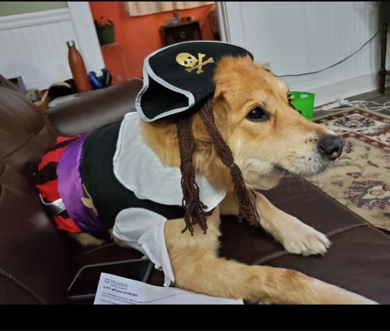Photo of Rome, a German Shepherd Dog, Miniature Schnauzer, Chinese Shar-Pei, and Cocker Spaniel mix in Winchester, Ohio, USA