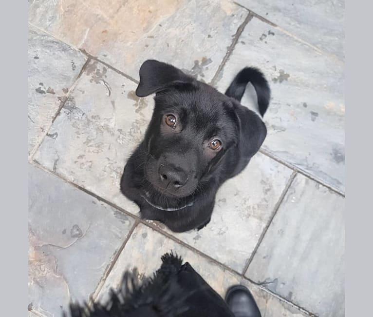 Photo of Ohana, a Hong Kong Village Dog  in Hong Kong Island, Hong Kong