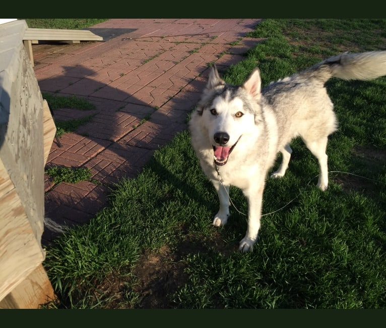Photo of Nuka, a   in Columbus, OH, USA