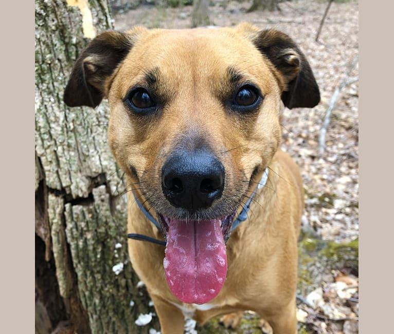 Photo of Stella, a Mountain Cur, Labrador Retriever, and Mixed mix in South Carolina, USA