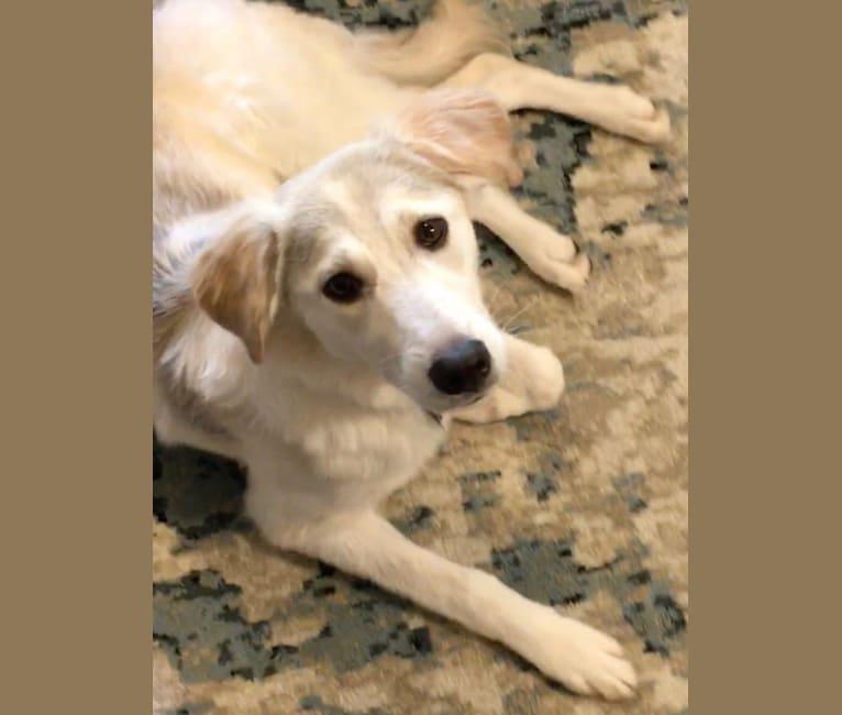 Photo of Stella, a Middle Eastern Village Dog  in Kuwait City, Al Asimah Governate, Kuwait