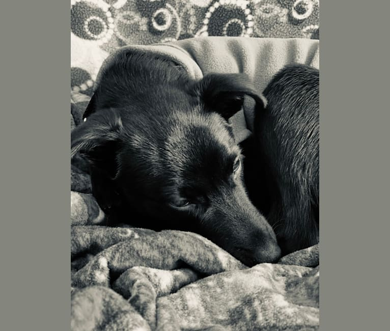 Photo of Blum, a Formosan Mountain Dog  in Taiwan