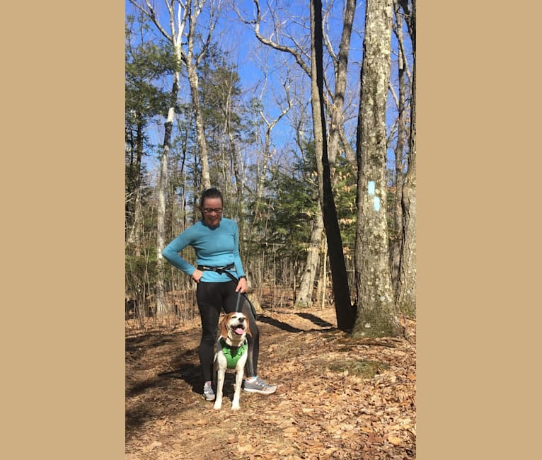 Photo of Wheeler, a Treeing Walker Coonhound and American English Coonhound mix in Nevada, USA